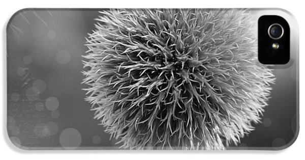 Prickly Beauty IPhone 5 / 5s Case by Mountain Dreams