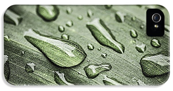 Dewdrop iPhone 5 Cases - Raindrops on leaf iPhone 5 Case by Elena Elisseeva