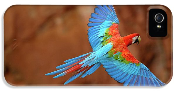 Red And Green Macaw Flying IPhone 5 / 5s Case by Pete Oxford