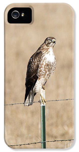 Red Tailed Hawk iPhone 5 Cases - Red Tail Stare iPhone 5 Case by Mike Dawson