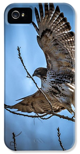 Redtail iPhone 5 Cases - Redtail Hawk iPhone 5 Case by Ernie Echols