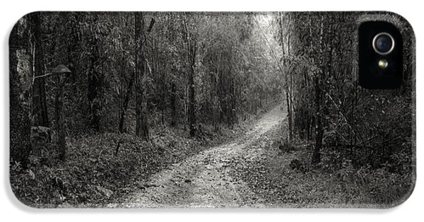Ecology iPhone 5 Cases - Road Way In Deep Forest iPhone 5 Case by Setsiri Silapasuwanchai