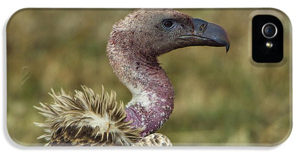Ruppells Vulture IPhone 5 / 5s Case by John Shaw