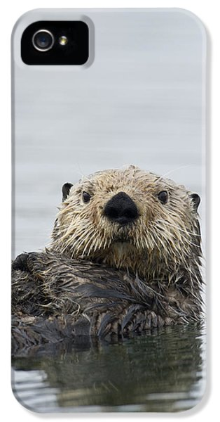 Sea Otter Alaska IPhone 5 / 5s Case by Michael Quinton