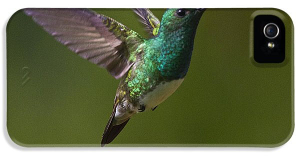 Beak iPhone 5 Cases - Snowy-bellied Hummingbird iPhone 5 Case by Heiko Koehrer-Wagner