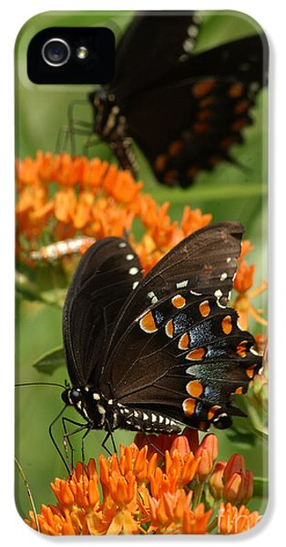 Arthropod iPhone 5 Cases - Spicebush Swallowtail Butterfly iPhone 5 Case by Susan Leavines
