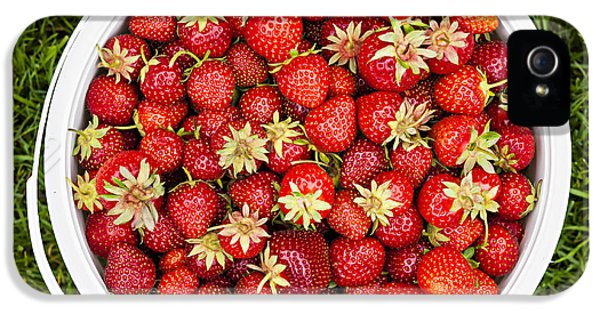 Plastic iPhone 5 Cases - Strawberries iPhone 5 Case by Elena Elisseeva