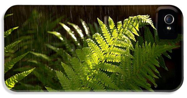 Fern iPhone 5 Cases - Summer rain iPhone 5 Case by Jane Rix
