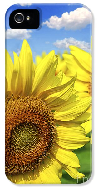 Summertime iPhone 5 Cases - Sunflowers iPhone 5 Case by Elena Elisseeva