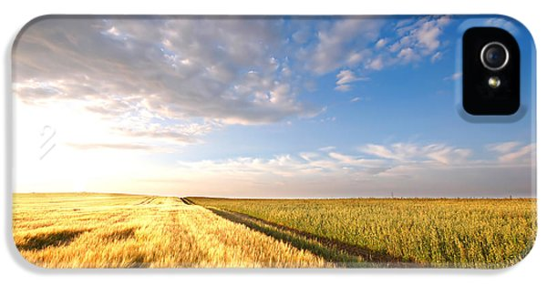Country iPhone 5 Cases - Sunset field iPhone 5 Case by Michal Bednarek