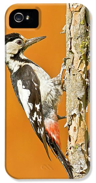 Syrian Woodpecker (dendrocopos Syriacus) IPhone 5 / 5s Case by Photostock-israel