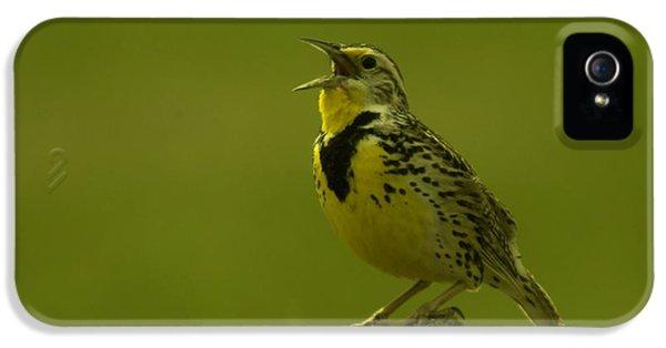 The Meadowlark Sings IPhone 5 / 5s Case by Jeff Swan