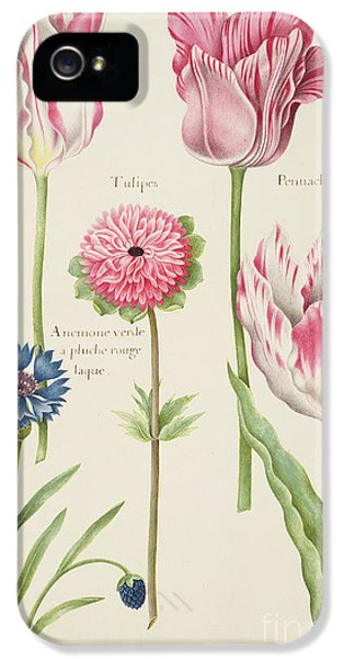 Tulips iPhone 5 Cases - Tulips iPhone 5 Case by Nicolas Robert