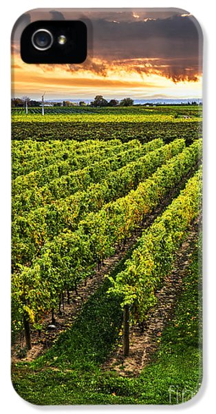 Field iPhone 5 Cases - Vineyard at sunset iPhone 5 Case by Elena Elisseeva