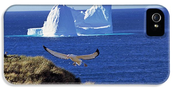 Wandering Albatross (diomendea Exulans IPhone 5 / 5s Case by Martin Zwick