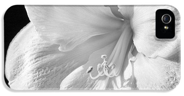 Pistil iPhone 5 Cases - White Amaryllis iPhone 5 Case by Adam Romanowicz