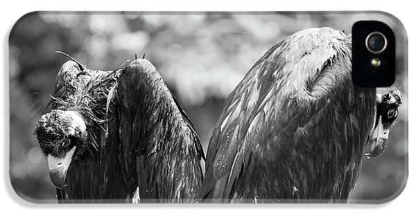 White-backed Vultures In The Rain IPhone 5 / 5s Case by Pan Xunbin