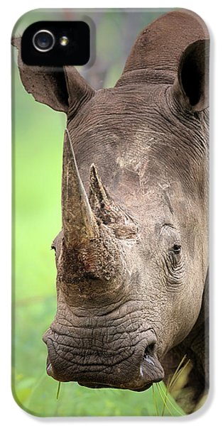 Squares iPhone 5 Cases - White Rhinoceros iPhone 5 Case by Johan Swanepoel