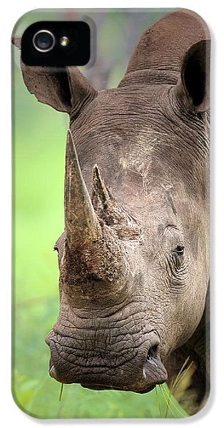 Square iPhone 5 Cases - White Rhinoceros iPhone 5 Case by Johan Swanepoel