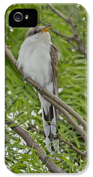 Yellow-billed Cuckoo IPhone 5 / 5s Case by Anthony Mercieca