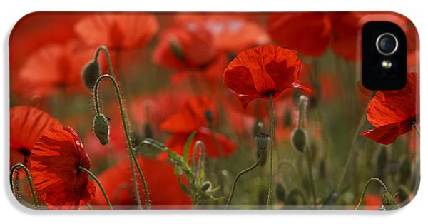 Many iPhone 5 Cases - Red Poppy Flowers iPhone 5 Case by Nailia Schwarz