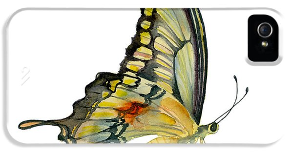 Swallowtail iPhone 5 Cases - 104 Perched Swallowtail Butterfly iPhone 5 Case by Amy Kirkpatrick