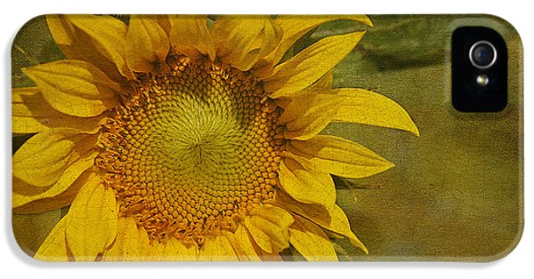Sunflower IPhone 5 / 5s Case by Cindi Ressler