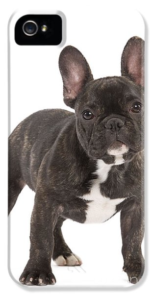 Canid iPhone 5 Cases - French Bulldog iPhone 5 Case by Jean-Michel Labat