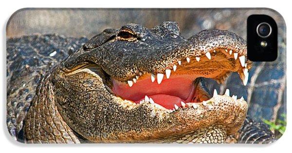 American Alligator IPhone 5 / 5s Case by Millard H. Sharp