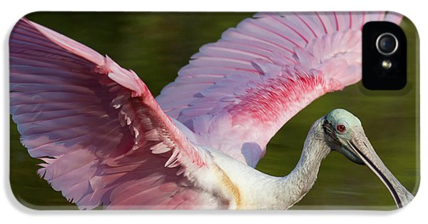 Usa, Florida, Everglades National Park IPhone 5 / 5s Case by Jaynes Gallery