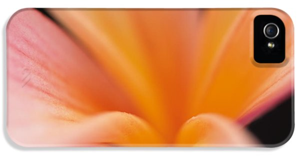 Untitled IPhone 5 / 5s Case by Anne Geddes
