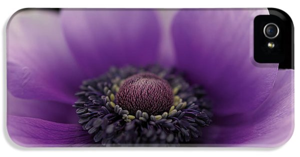 Anne Geddes iPhone 5 Cases - Untitled iPhone 5 Case by Anne Geddes
