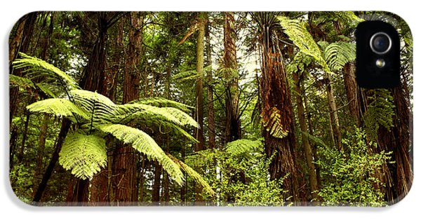 Daytime iPhone 5 Cases - Forest iPhone 5 Case by Les Cunliffe