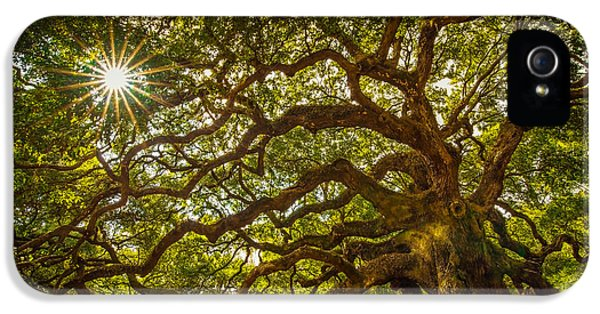 Historic Oak iPhone 5 Cases - Angel Oak iPhone 5 Case by Serge Skiba