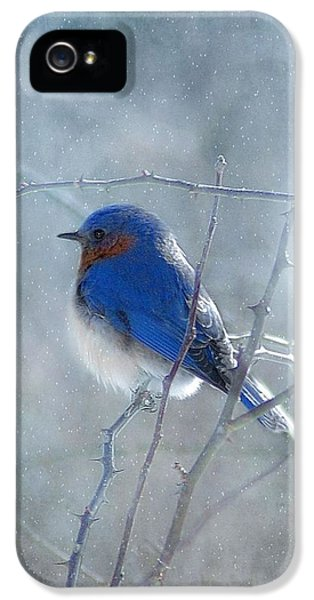 Blue Bird iPhone 5 Cases - Blue Bird  iPhone 5 Case by Fran J Scott