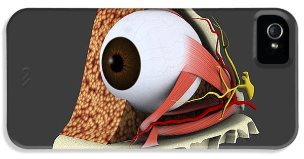 Eyeball iPhone 5 Cases - Conceptual Image Of Human Eye Anatomy iPhone 5 Case by Stocktrek Images