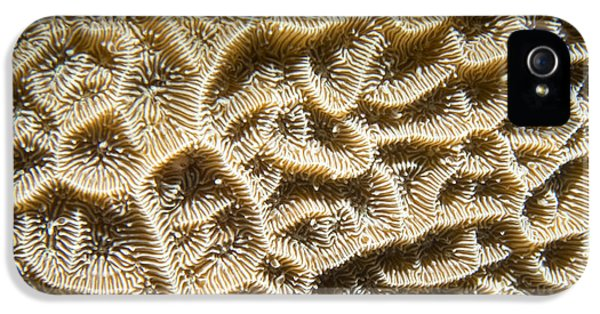 Polyp iPhone 5 Cases - Coral Maze iPhone 5 Case by Jean Noren