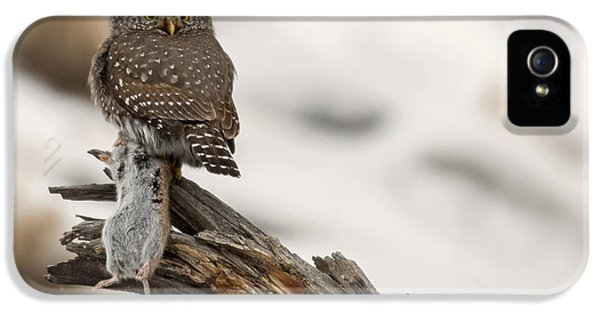 Eyes Of The Hunter IPhone 5 / 5s Case by Sandy Sisti