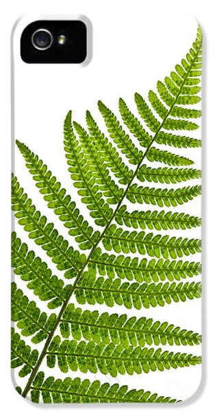 Growth iPhone 5 Cases - Fern leaf iPhone 5 Case by Elena Elisseeva