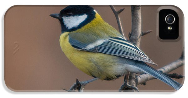 Passeridae iPhone 5 Cases - Great Tit iPhone 5 Case by Jivko Nakev