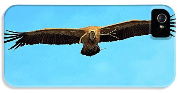 Griffon Vulture In Flight IPhone 5 / 5s Case by Bildagentur-online/mcphoto-schaef