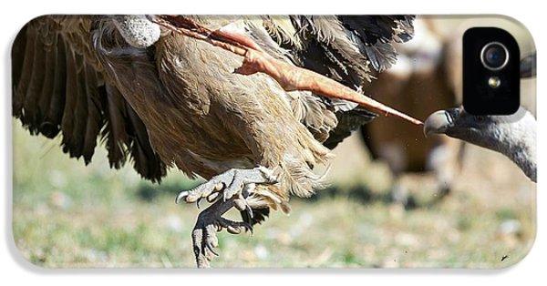 Griffon Vultures Feeding IPhone 5 / 5s Case by Nicolas Reusens