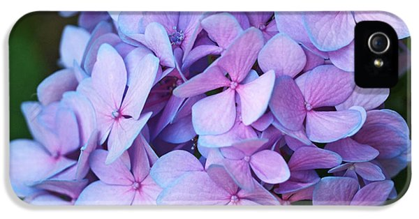 Flower iPhone 5 Cases - Hydrangea iPhone 5 Case by Rona Black