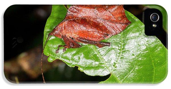 Leaf Mimic Katydid IPhone 5 / 5s Case by Dr Morley Read