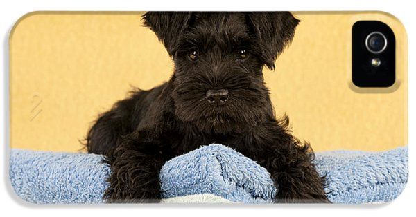 Canid iPhone 5 Cases - Miniature Schnauzer Puppy iPhone 5 Case by John Daniels
