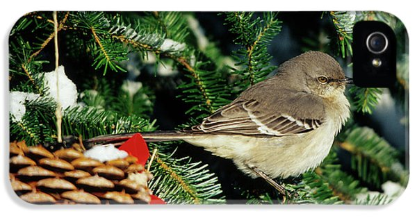 Northern Mockingbird (mimus Polyglottos IPhone 5 / 5s Case by Richard and Susan Day