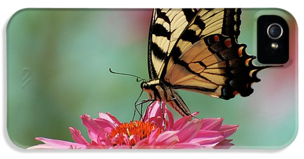Swallowtail iPhone 5 Cases - Pastel iPhone 5 Case by Lois Bryan