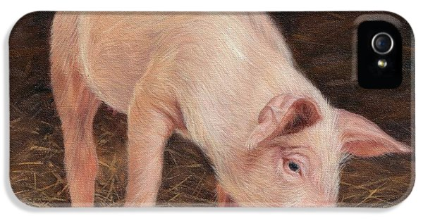 Pig IPhone 5 / 5s Case by David Stribbling