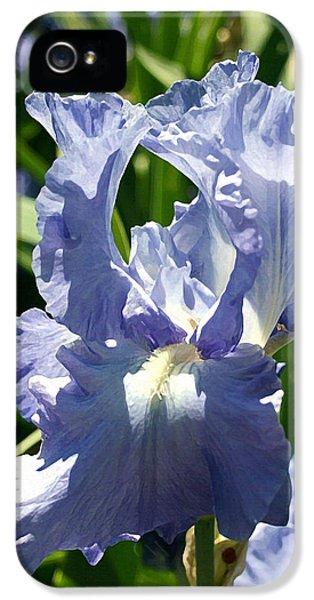 Purple Bearded Iris IPhone 5 / 5s Case by Ellen Henneke