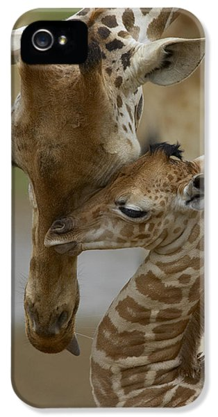 Zoo iPhone 5 Cases - Rothschild Giraffe and Calf iPhone 5 Case by San Diego Zoo